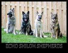 Echo Shilohs
