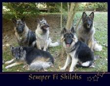 Semper Fi Shilohs