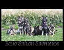 Echo Shlohs