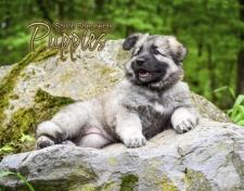 Shiloh Puppies