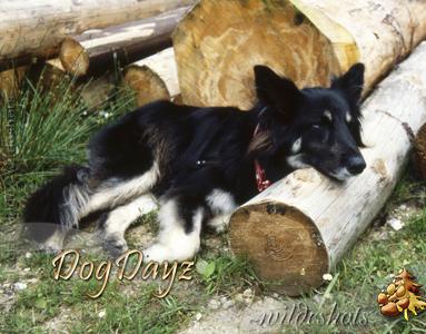 2016 Dog Dayz